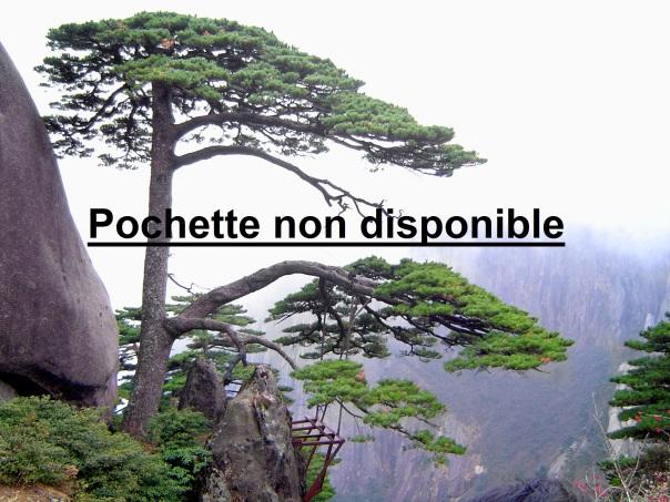 fir pine trees